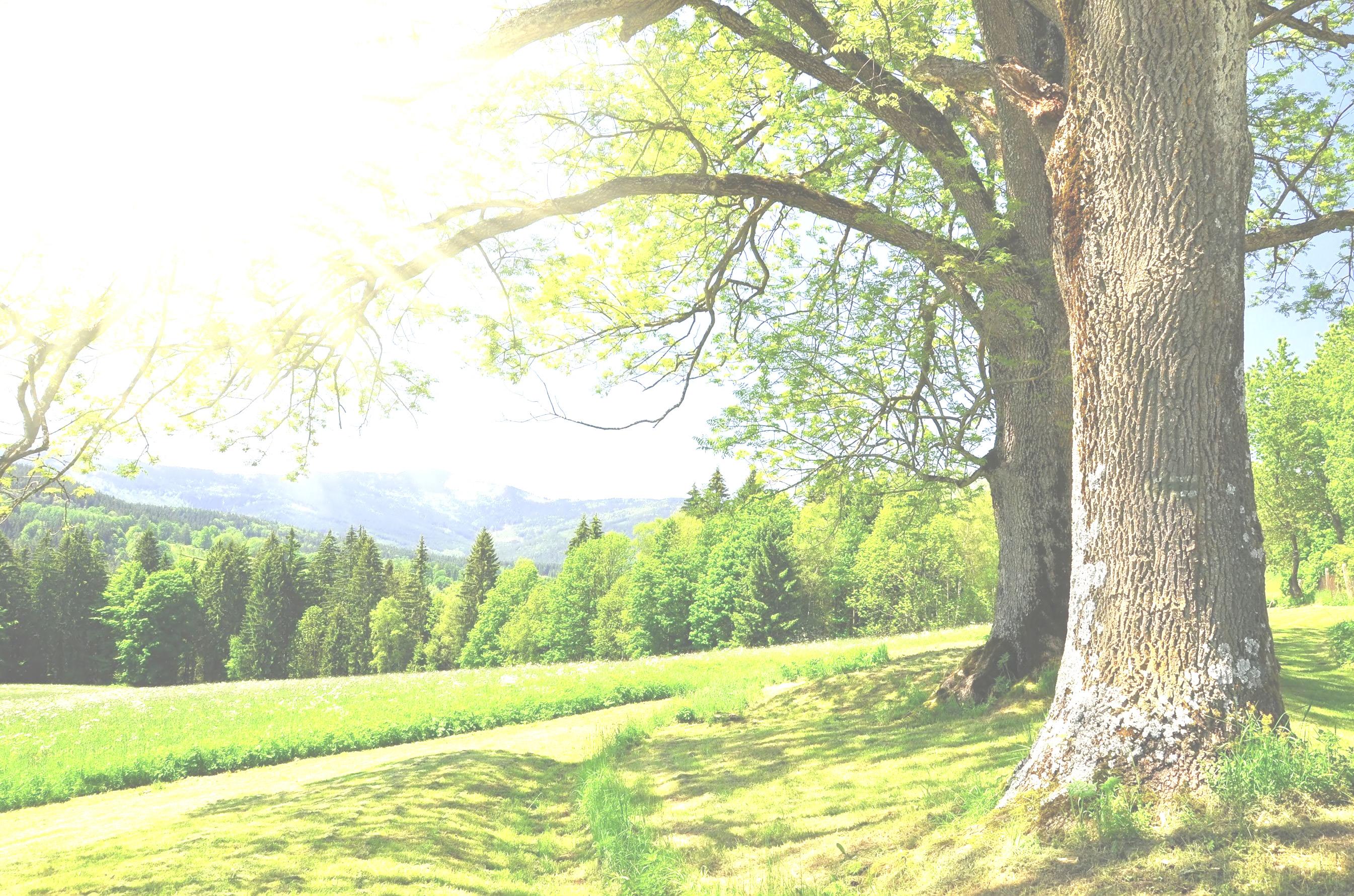 sfondo_albero_2